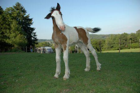 De paarden van Morvan Rustique - Paardrijden in Frankrijk